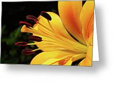 Hybrid Lily Greeting Card