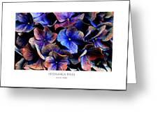 Hydranga Hues Greeting Card