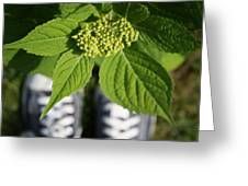 Hydrangea And My Sneakers Greeting Card