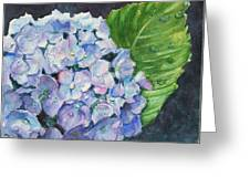Hydrangea And Water Droplet Greeting Card
