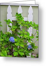 Hydrangea Blooming In October Greeting Card