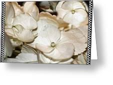 Hydrangea Blossom Framed Greeting Card