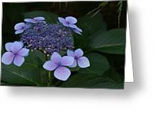 Hydrangea Blue In The Garden Xii Greeting Card