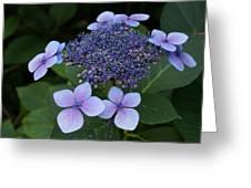Hydrangea Blue Xi Greeting Card