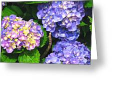 Hydrangea Blues Greeting Card