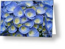 Hydrangea Closeup Greeting Card