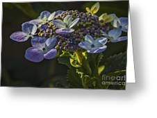Hydrangea Color Greeting Card