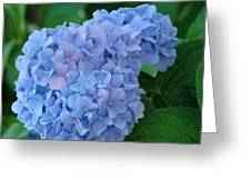 Hydrangea Floral Flowers Art Prints Baslee Troutman Greeting Card