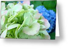 Hydrangea Flowers Art Prints Floral Gardens Gliclee Baslee Troutman Greeting Card