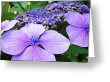 Hydrangea Flowers Art Prints Hydrangea Garden Giclee Art Prints Baslee Troutman Greeting Card