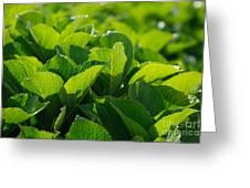 Hydrangea Foliage Greeting Card by Gaspar Avila