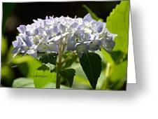 Hydrangea Four Greeting Card