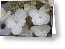Hydrangea Fractalius Greeting Card