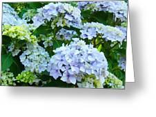 Hydrangea Garden Landscape Flower Art Prints Baslee Troutman Greeting Card