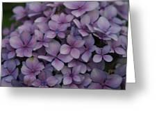 Hydrangea In Lavender 1 Greeting Card