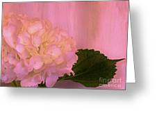 Hydrangea In Pink Greeting Card