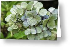 Hydrangea  In Purple And Pale Yellow Greeting Card