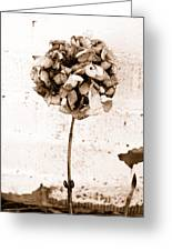 Hydrangea Interest Greeting Card