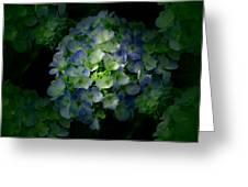Hydrangea - Flowers Greeting Card