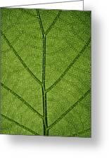Hydrangea Leaf Greeting Card