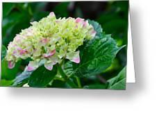 Hydrangea Greeting Card by Lori Kesten