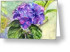 Hydrangea On Clayboard Greeting Card
