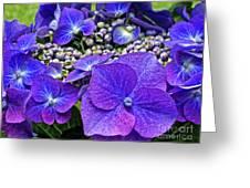 Hydrangea Plant Greeting Card