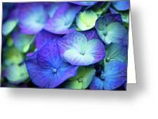 Hydrangea - Purple And Green Greeting Card