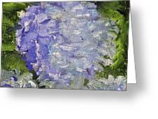 Hydrangea Time Greeting Card