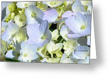 Hydrangea Two Greeting Card