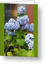 Hydrangea Window Greeting Card