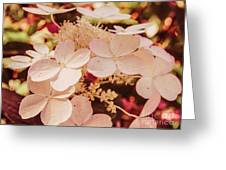 Hydrangeas 7 Greeting Card