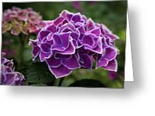 Hydrangeas In The Summer Greeting Card