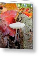 Hygrocybe Borealis Greeting Card