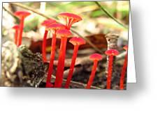 Hygrophorus Cantharellus Greeting Card