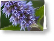 Hyssop Blue Greeting Card