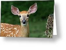 I Am All Ears Greeting Card