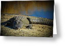 I Am Gator, No. 60 Greeting Card