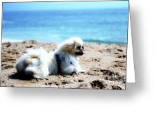 I Am King Of This Beach Greeting Card