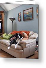 I Am Not A Couch Potato. I Am A Couch Dog Greeting Card