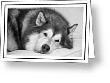 I Am Snoozing Greeting Card