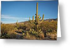 I Am The Tallest Saguaro Greeting Card