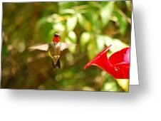 I Can Fly Greeting Card