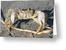 I Feel Crabby Greeting Card