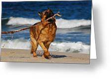 I Got It - German Shepherd Dog Greeting Card