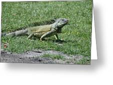 I Iguana Greeting Card