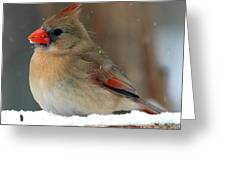 I Just Can't Resist The Beauty Of A Cardinal In The Snow Greeting Card
