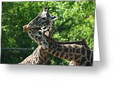 I Just Love Tall Spotted And Handsome Greeting Card