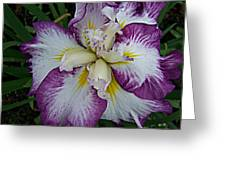 I Love Iris Greeting Card