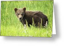 I Love Me A Teddy Bear Greeting Card by Belinda Greb